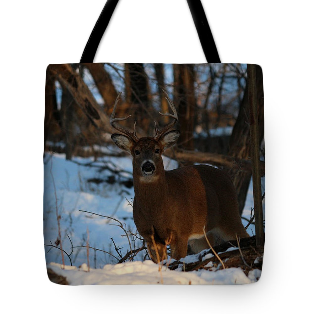 Deer Tote Bag featuring the photograph Stag by Lori Tordsen