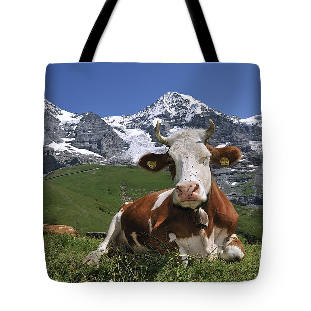 Alpine Cow Tote Bag featuring the photograph 100205p181 by Arterra Picture Library