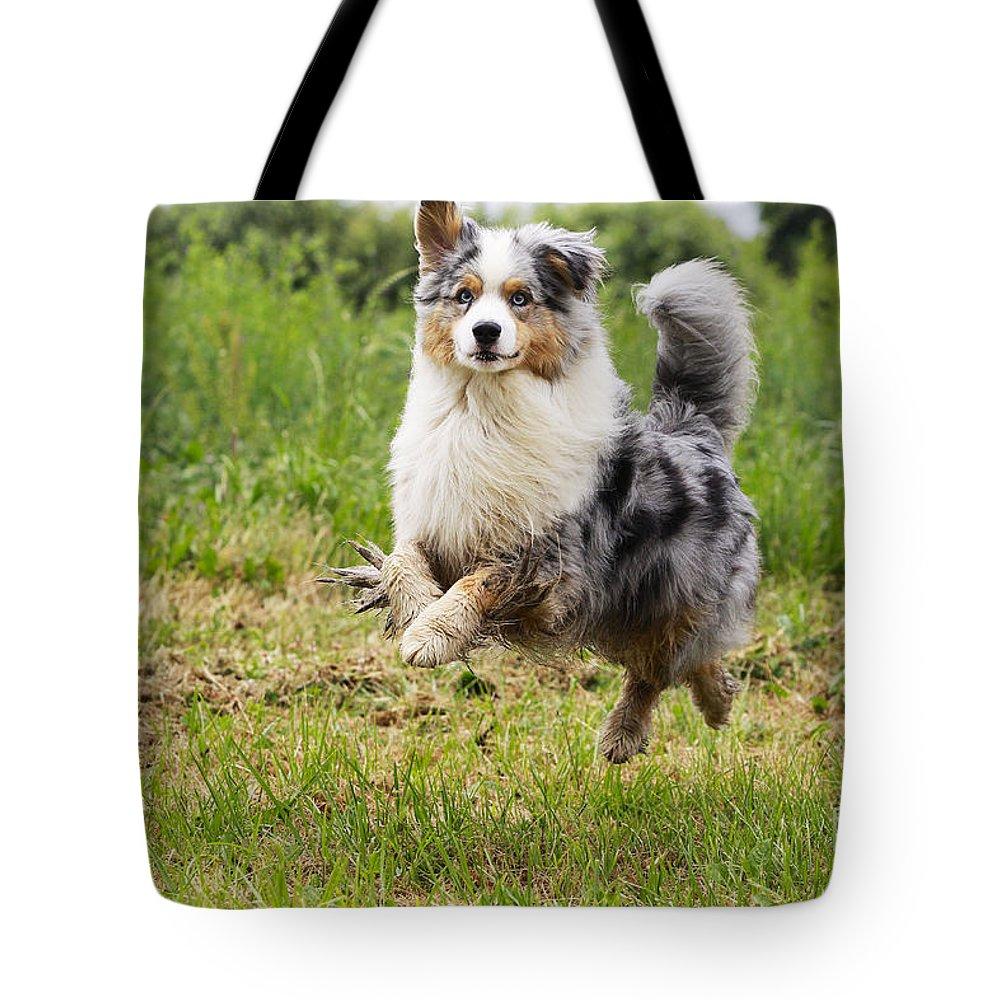 Australian Sheepdog Tote Bag featuring the photograph Australian Shepherd Dog by Jean-Michel Labat