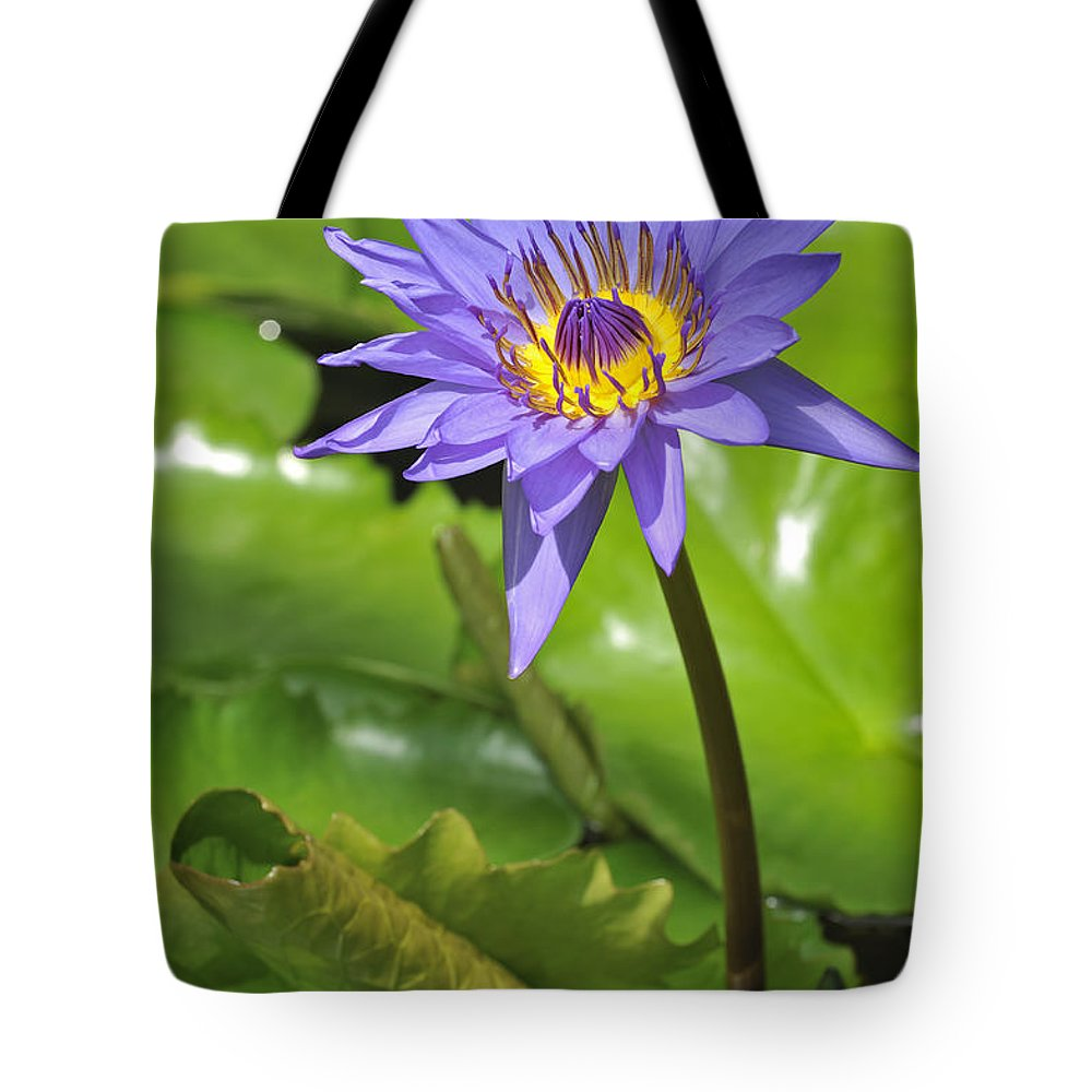 Nymphaea Director G.t Moore Tote Bag featuring the photograph 120520p014 by Arterra Picture Library