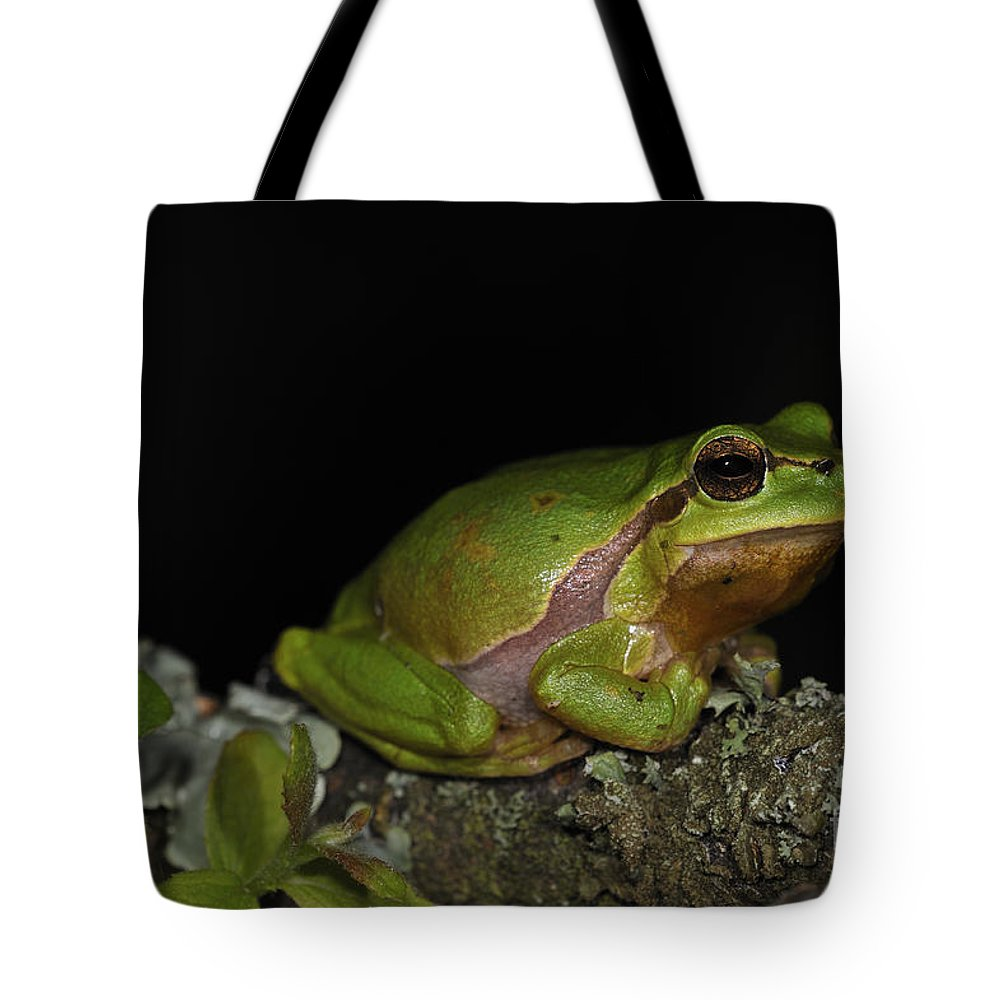 European Tree Frog Tote Bag featuring the photograph 120520p059 by Arterra Picture Library