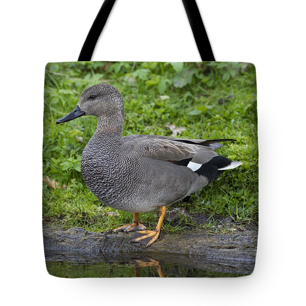 Anas Strepera Tote Bag featuring the photograph 120520p324 by Arterra Picture Library