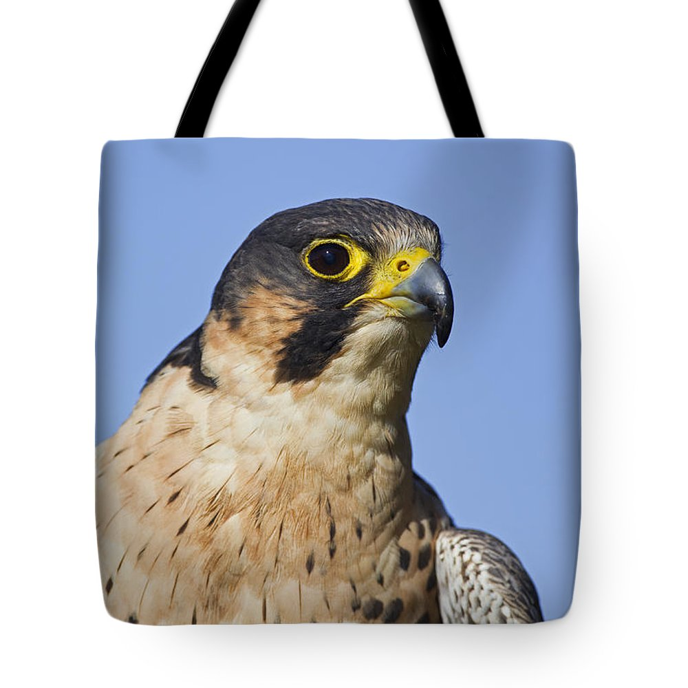 Peregrine Falcon Tote Bag featuring the photograph 130201p040 by Arterra Picture Library