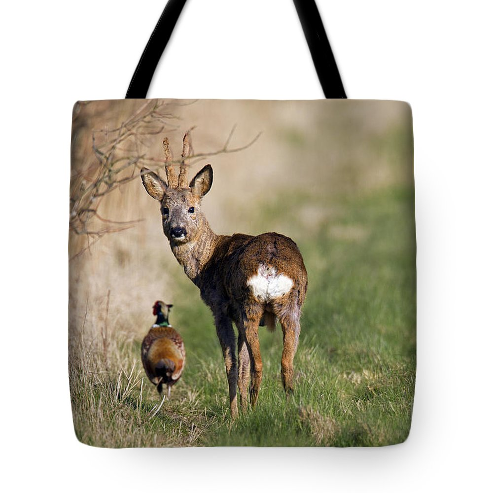 Common Pheasant Tote Bag featuring the photograph 130201p187 by Arterra Picture Library