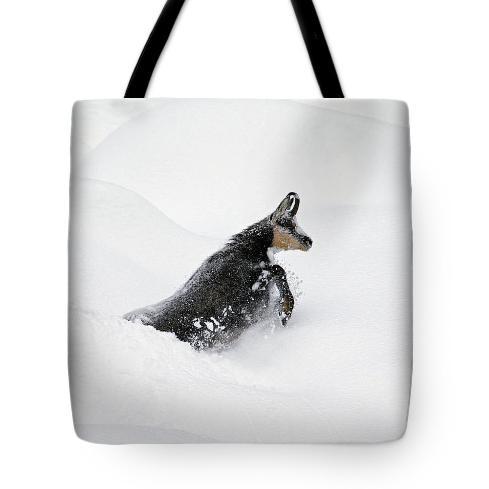 Chamois Tote Bag featuring the photograph 130201p209 by Arterra Picture Library