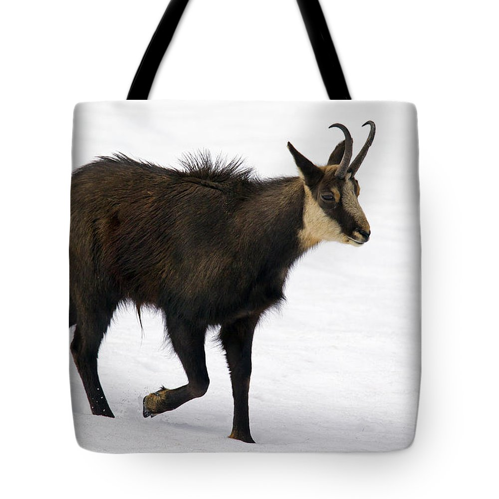 Chamois Tote Bag featuring the photograph 130201p218 by Arterra Picture Library