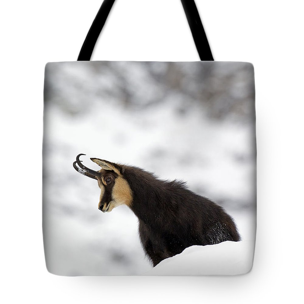 Chamois Tote Bag featuring the photograph 130201p229 by Arterra Picture Library
