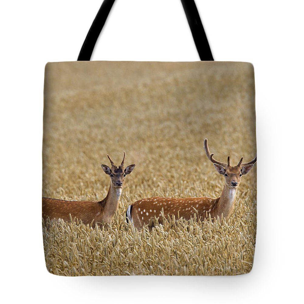 Two Tote Bag featuring the photograph 130201p299 by Arterra Picture Library