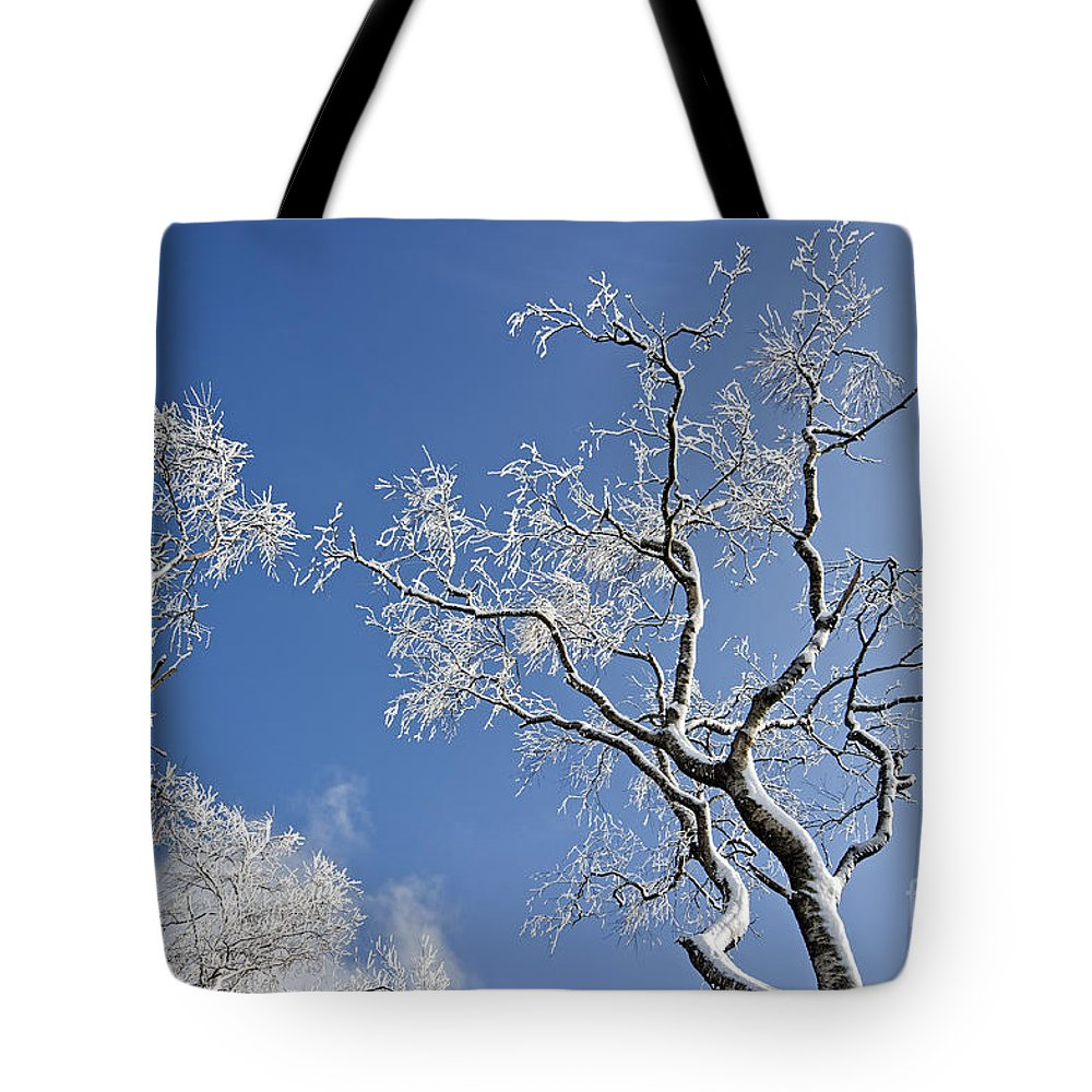 Deciduous Tote Bag featuring the photograph 130201p336 by Arterra Picture Library