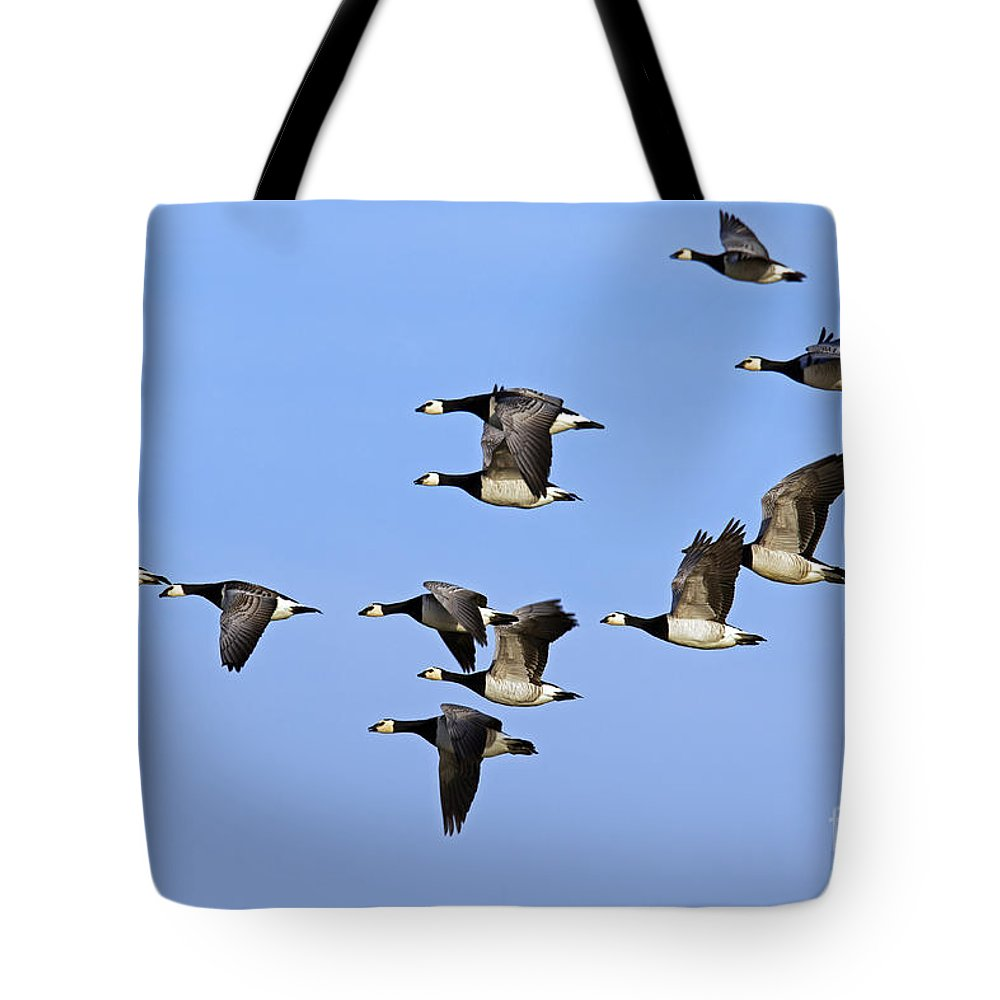 Barnacle Goose Tote Bag featuring the photograph 130215p251 by Arterra Picture Library