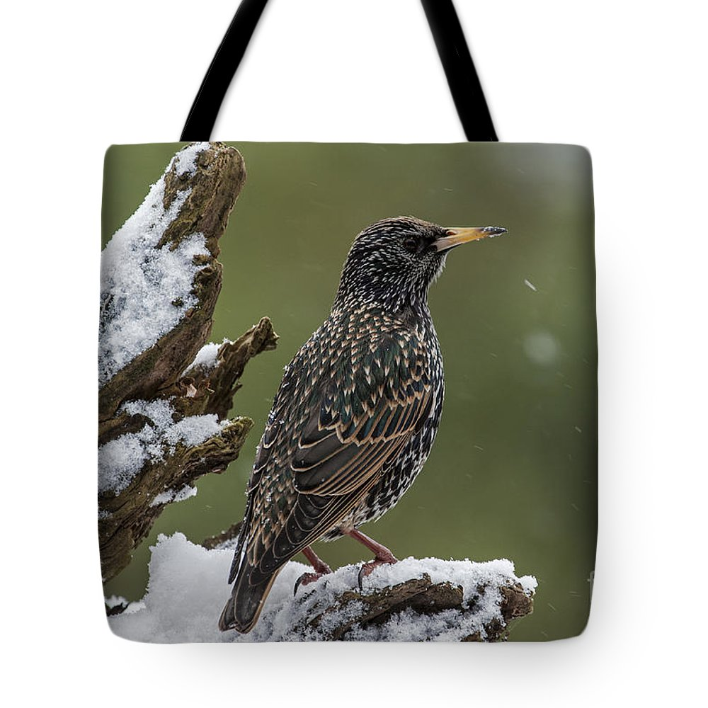 Common Starling Tote Bag featuring the photograph 130215p296 by Arterra Picture Library
