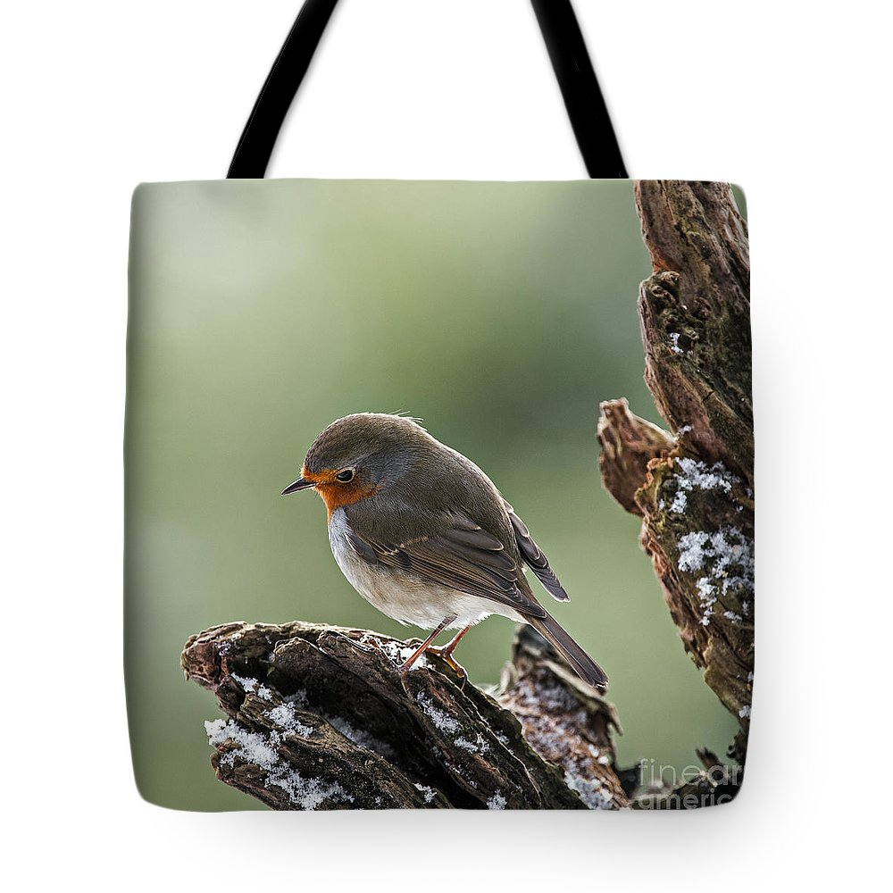 European Robin Tote Bag featuring the photograph 130215p300 by Arterra Picture Library
