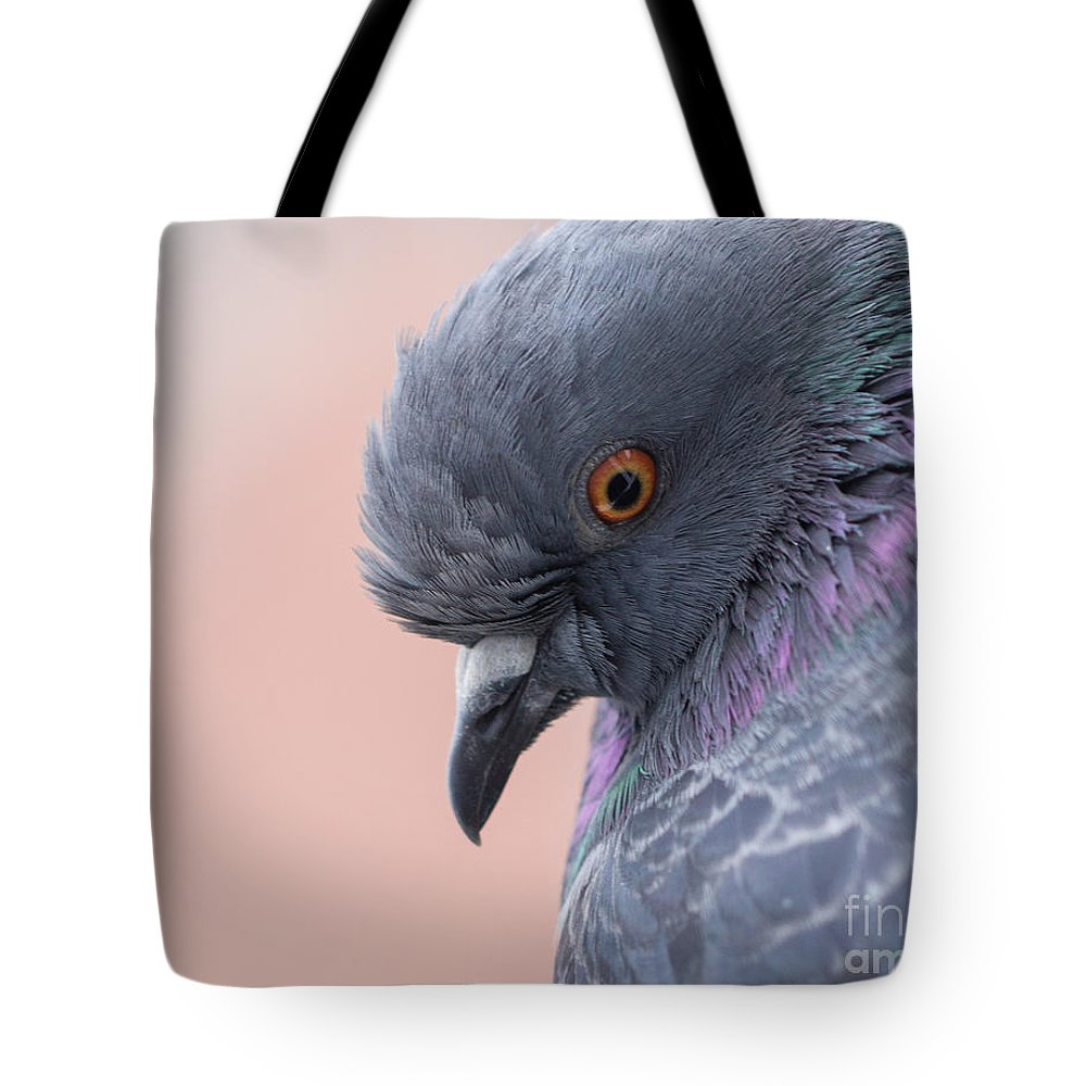 Birds Tote Bag featuring the photograph Rock Dove by Jivko Nakev