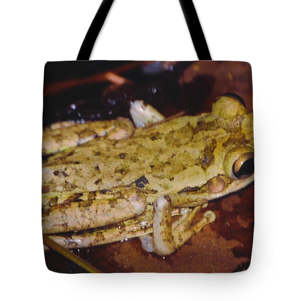 Blending In To Background Tote Bag featuring the photograph Tree Frog by Robert Floyd