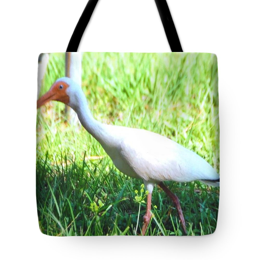 Feeding In My Backyard Tote Bag featuring the photograph White Ibis by Robert Floyd