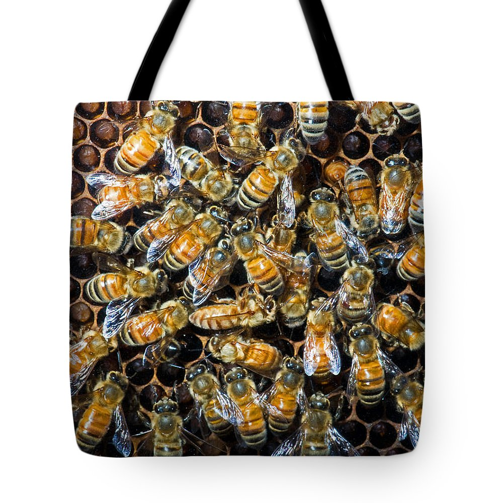 Insect Tote Bag featuring the photograph Honey Bees In Hive by Millard H. Sharp
