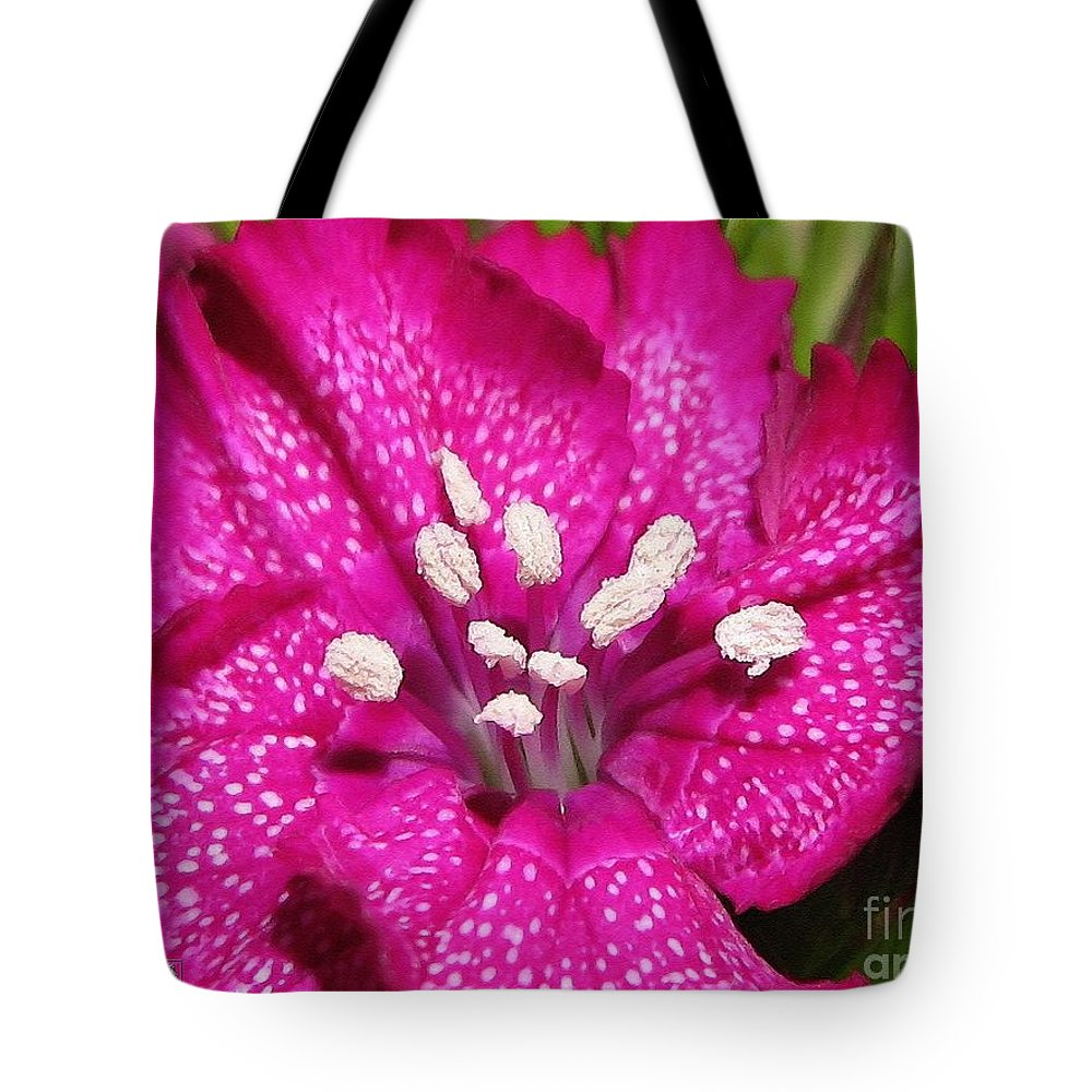 Mccombie Tote Bag featuring the painting Sweet William From The Super Duplex Bluepoint Mix by J McCombie