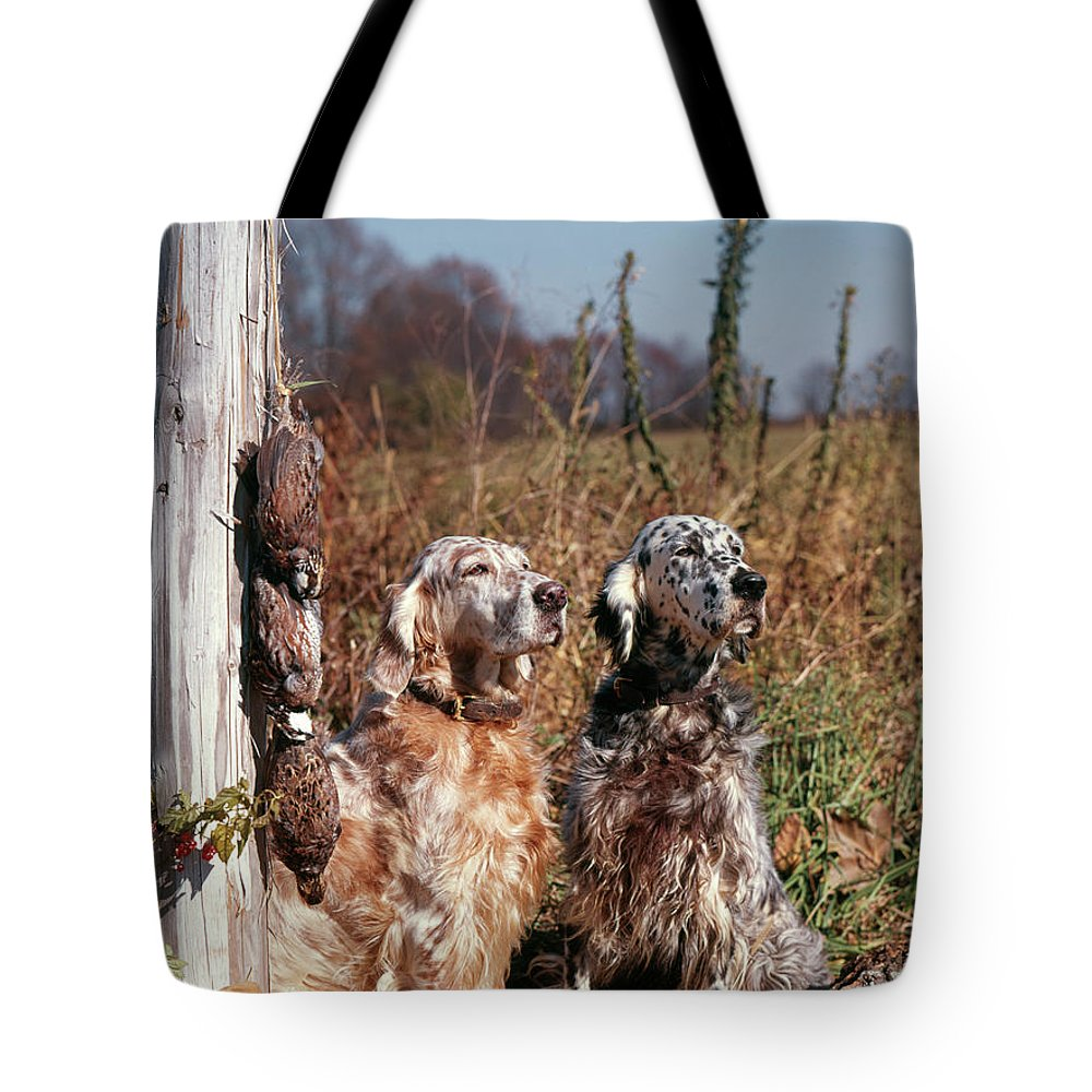 Photography Tote Bag featuring the photograph 1960s Two English Setter Dogs Sitting by Animal Images