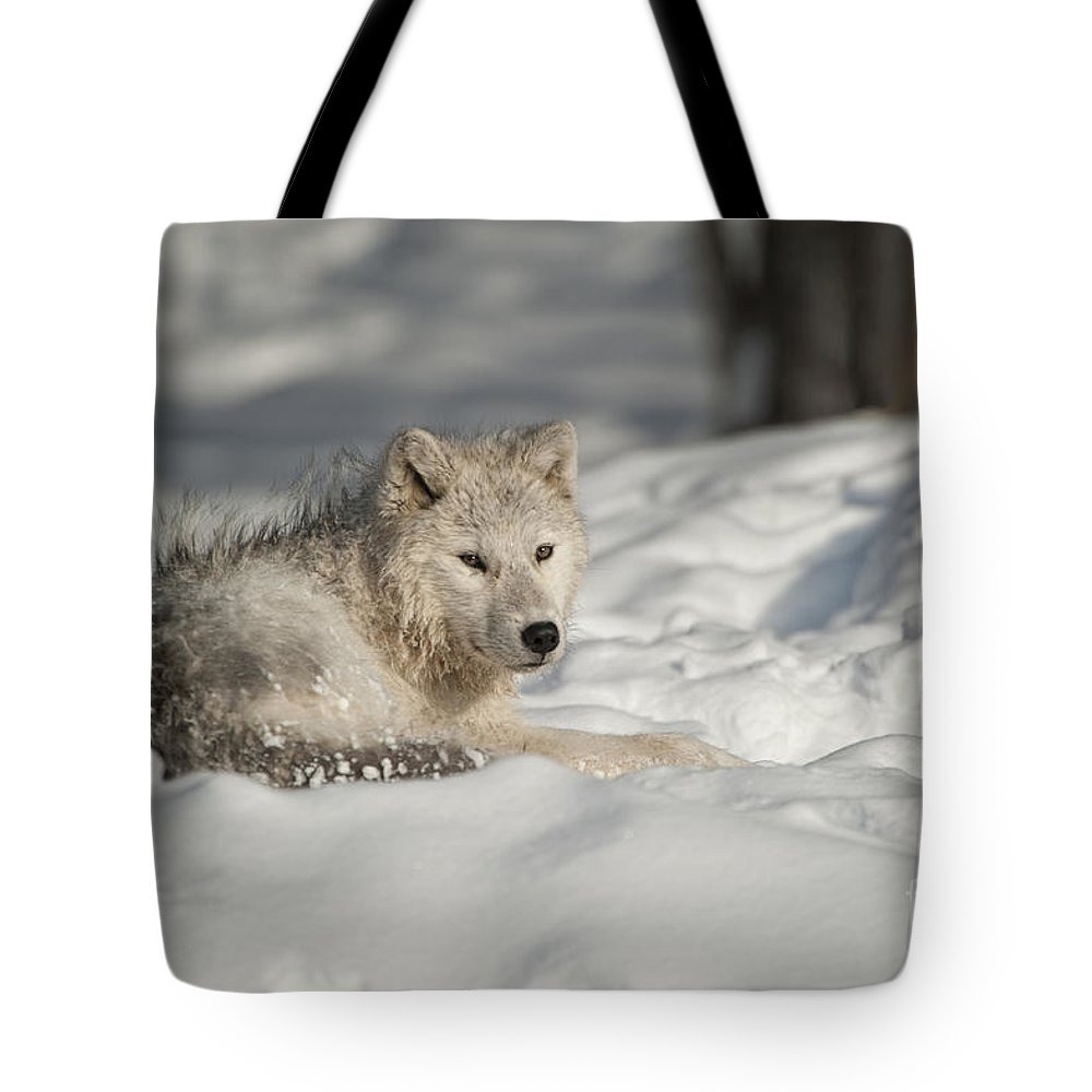 Arctic Wolf Photography Tote Bag featuring the photograph Arctic Wolf Pup by Wolves Only