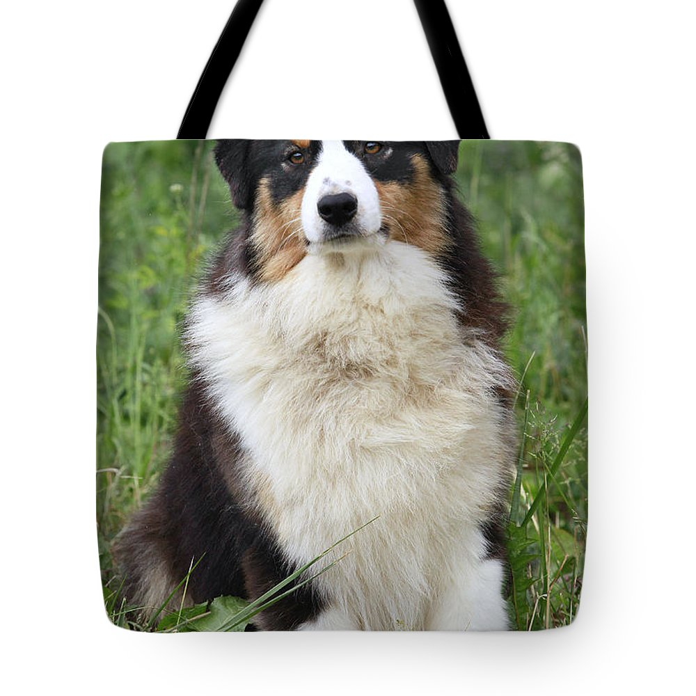 Australian Sheepdog Tote Bag featuring the photograph Australian Shepherd Dog by Jean-Michel Labat