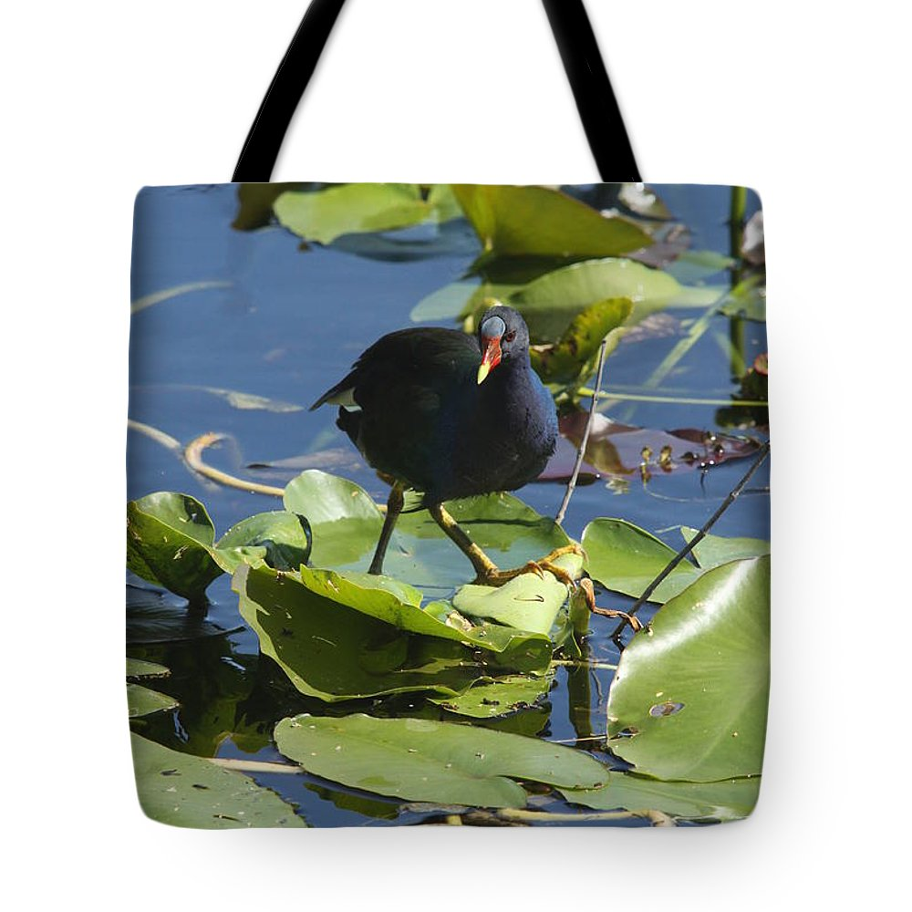 Bird Tote Bag featuring the photograph Balancing Act by Christiane Schulze Art And Photography
