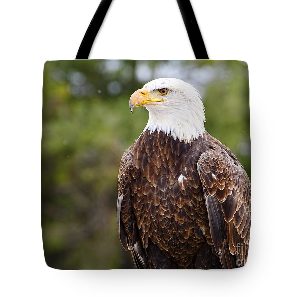 Snow Tote Bag featuring the photograph Bald Eagle by Les Palenik
