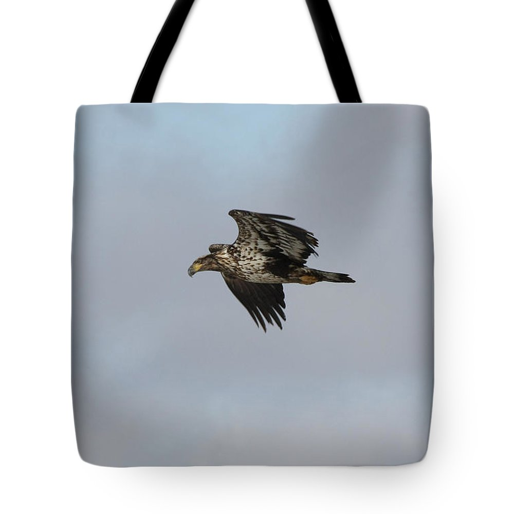 Bald Eagle Tote Bag featuring the photograph Bald Eagle by Lori Tordsen