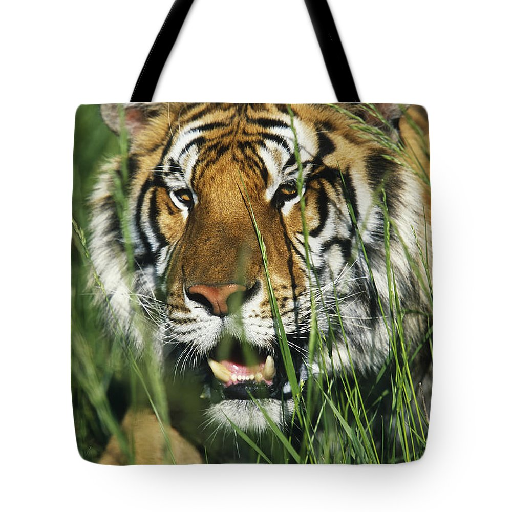 Animal Tote Bag featuring the photograph Bengal Tiger by David Davis