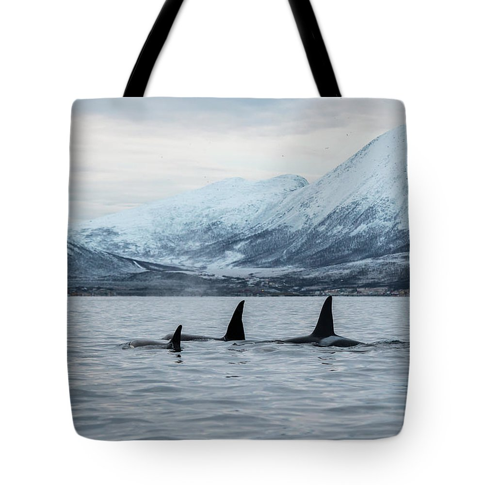 Snow Tote Bag featuring the photograph 2 Big 2 Small by By Wildestanimal