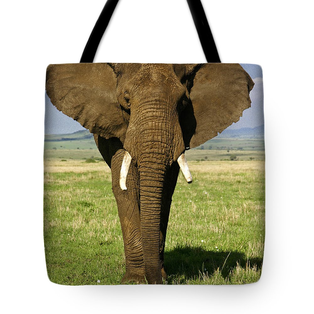 Africa Tote Bag featuring the photograph Big Boy by Michele Burgess