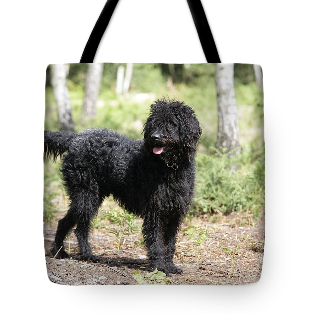 Black Labradoodle Tote Bag featuring the photograph Black Labradoodle by John Daniels