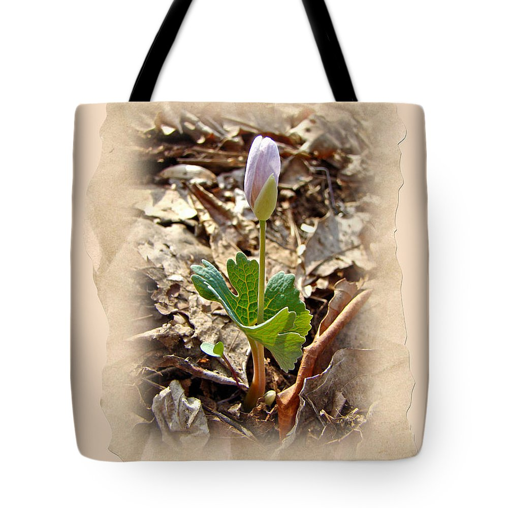 Bloodroot Tote Bag featuring the photograph Bloodroot Wildflower - Sanguinaria Canadensis by Mother Nature