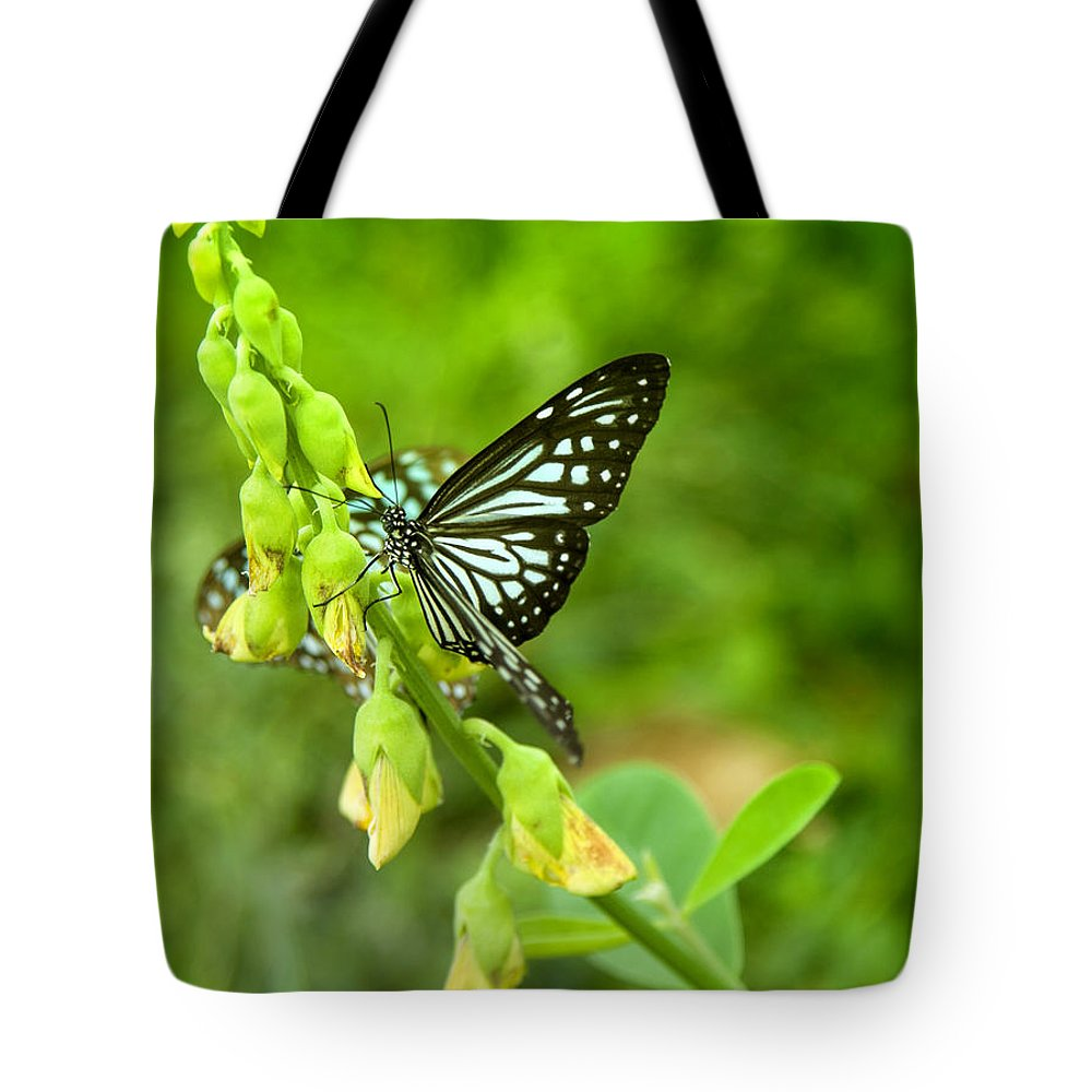 Butterfly Tote Bag featuring the photograph Blue Butterflies In The Green Garden by Gina Koch