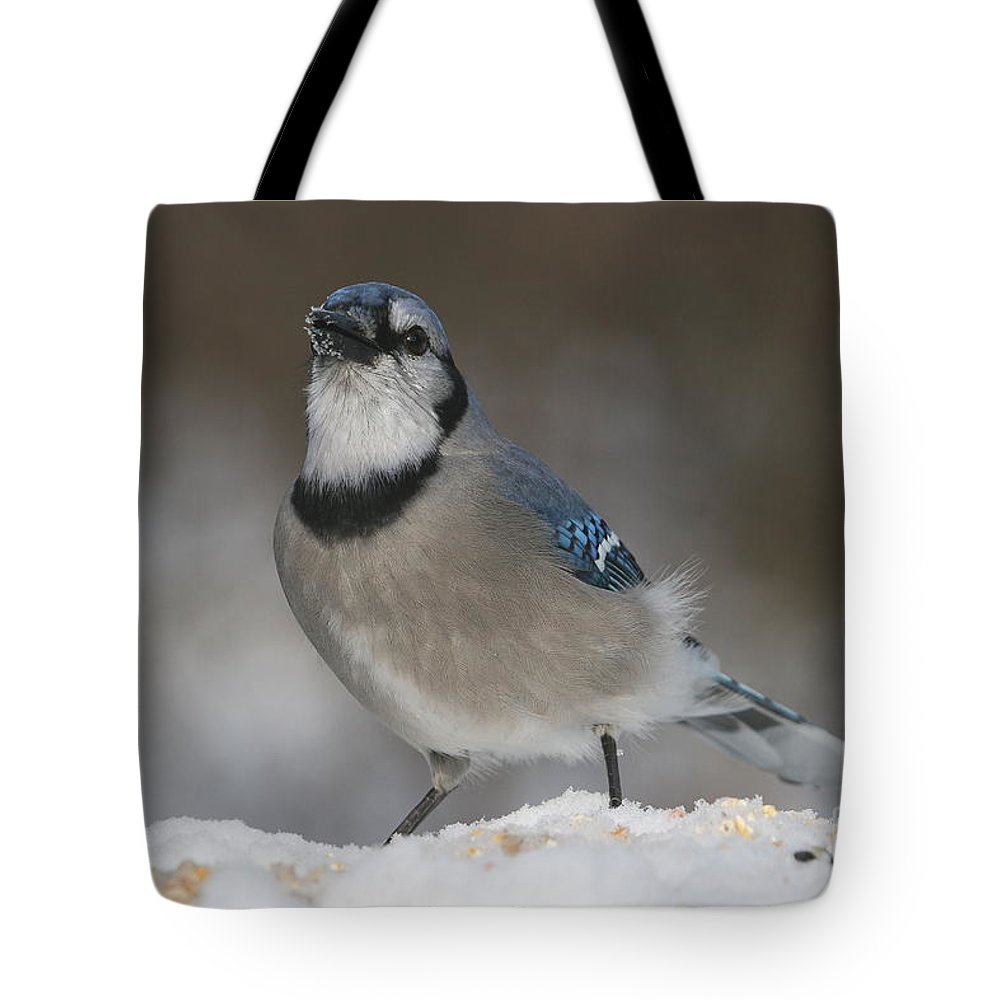 Bird Tote Bag featuring the photograph Blue Jay by Ken Keener