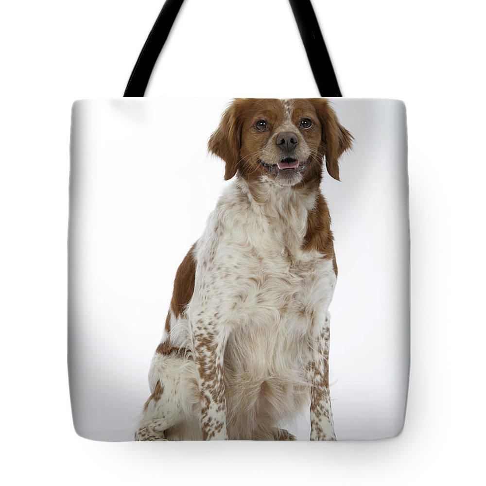 Brittany Spaniel Tote Bag featuring the photograph Brittany Spaniel Or Epagneul Breton by John Daniels