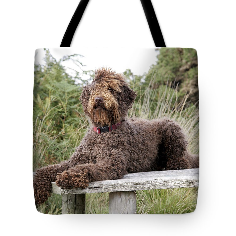 Labradoodle Tote Bag featuring the photograph Brown Labradoodle by John Daniels