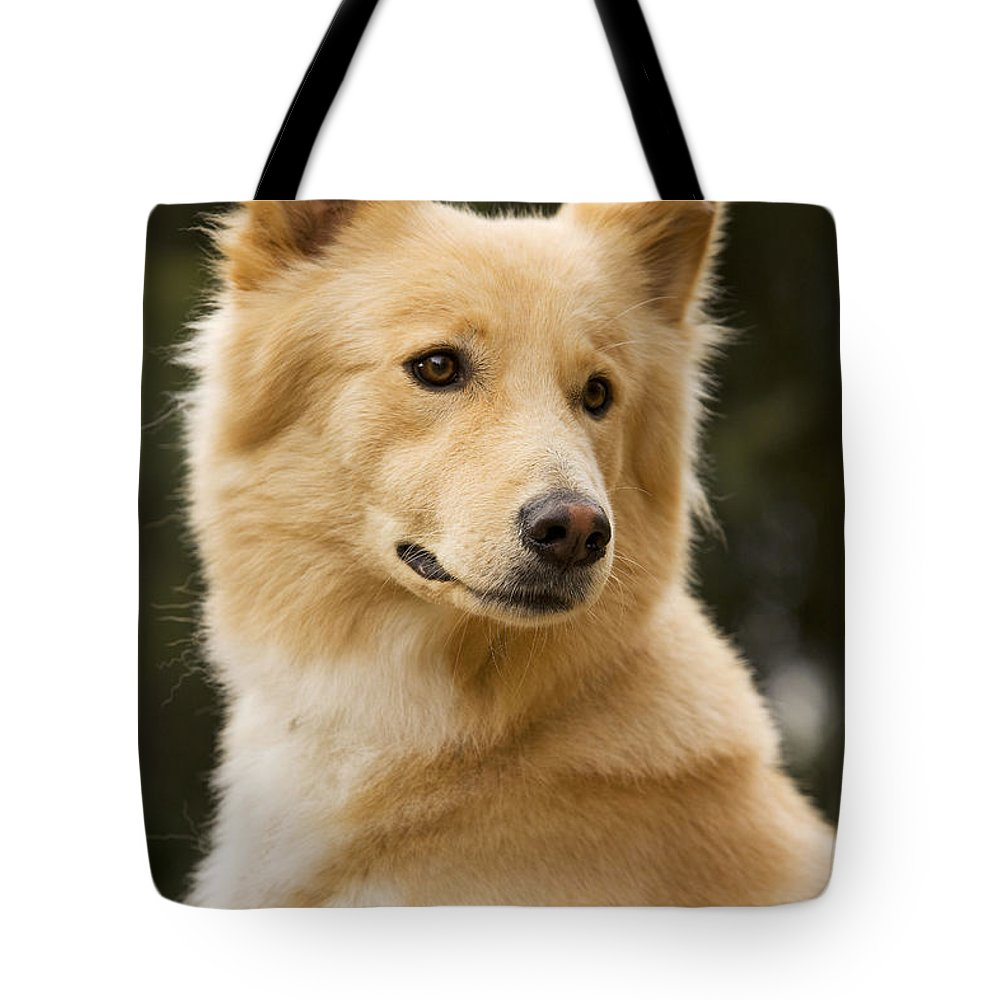 Canaan Dog Tote Bag featuring the photograph Canaan Dog by Jean-Michel Labat