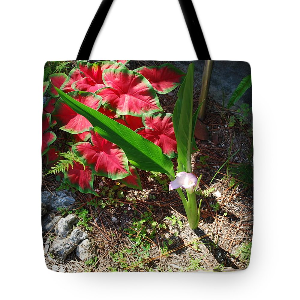 Growing In My Yard Tote Bag featuring the photograph Canna Lily by Robert Floyd