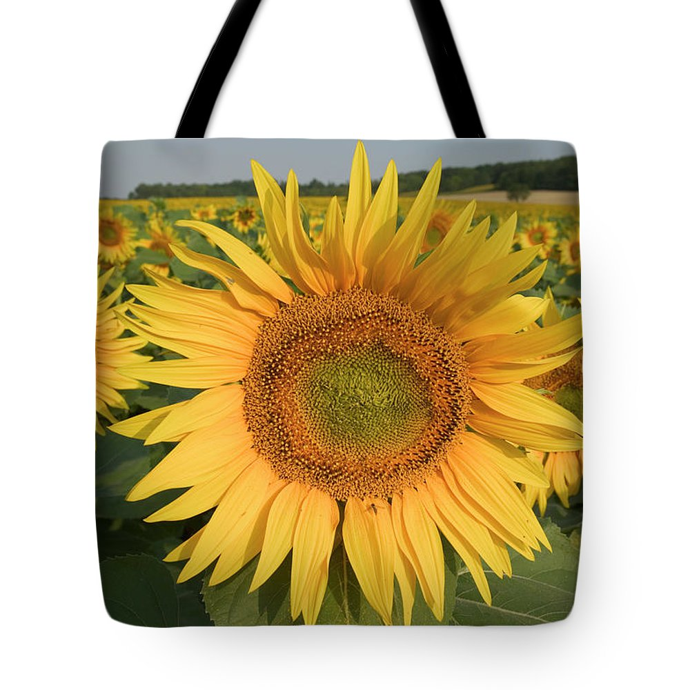 Jh Tote Bag featuring the photograph Common Sunflower Helianthus Annuus by Cyril Ruoso