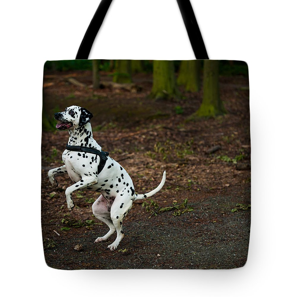 Dalmation Tote Bag featuring the photograph Dalmatian 5 by Martin FF