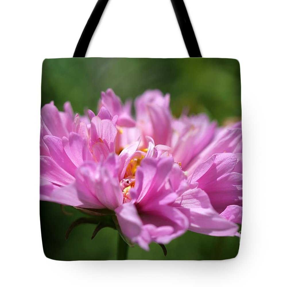 Mccombie Tote Bag featuring the photograph Double Click Cosmos Named Rose Bonbon by J McCombie