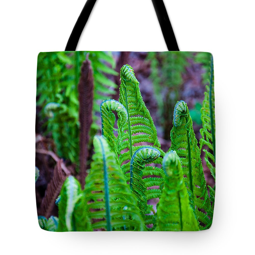 Green Color Tote Bag featuring the photograph Earth Horses by Yevgeni Kacnelson