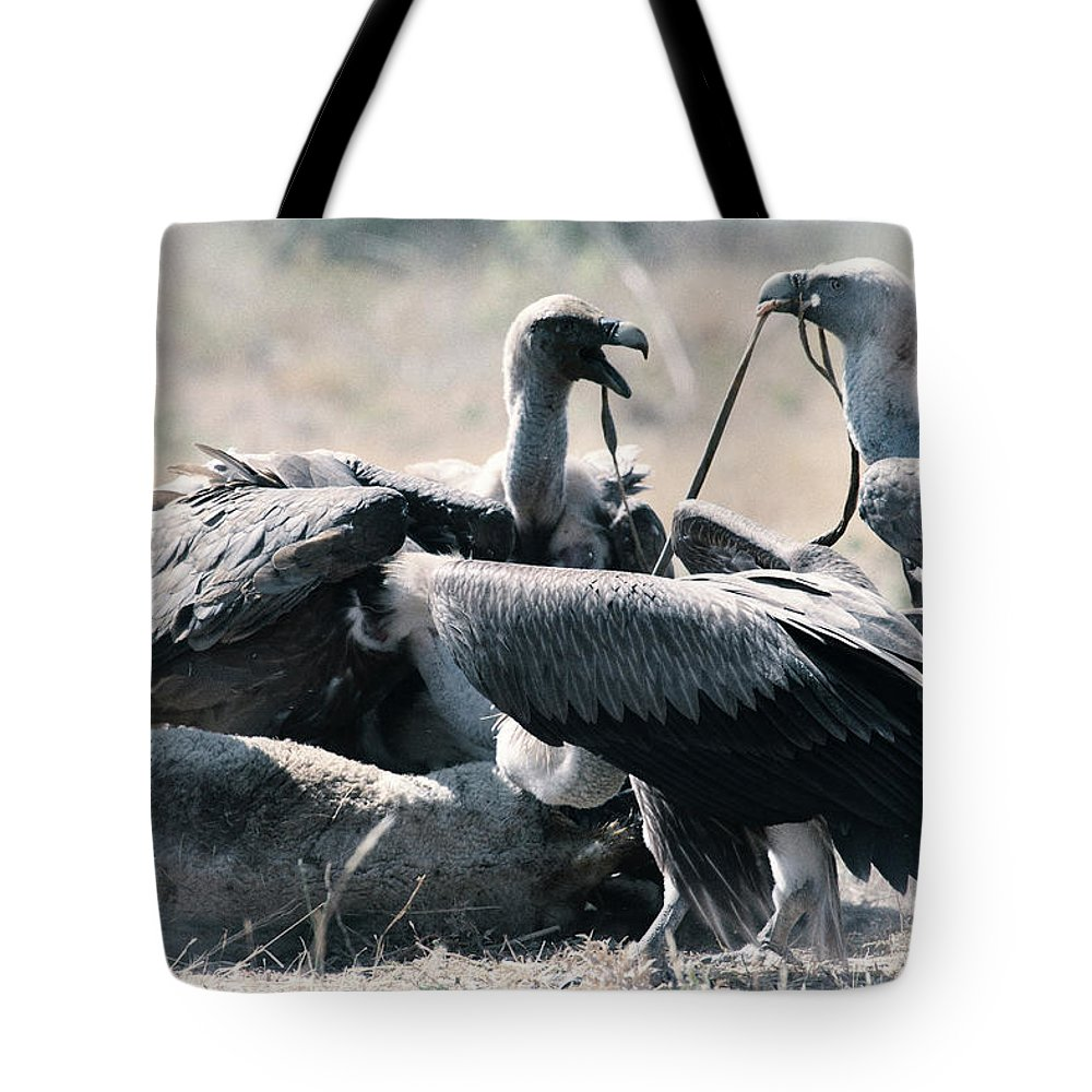 Wildlife Tote Bag featuring the photograph Eurasian Griffon Vulture Gyps Fulvus by David Santiago Garcia