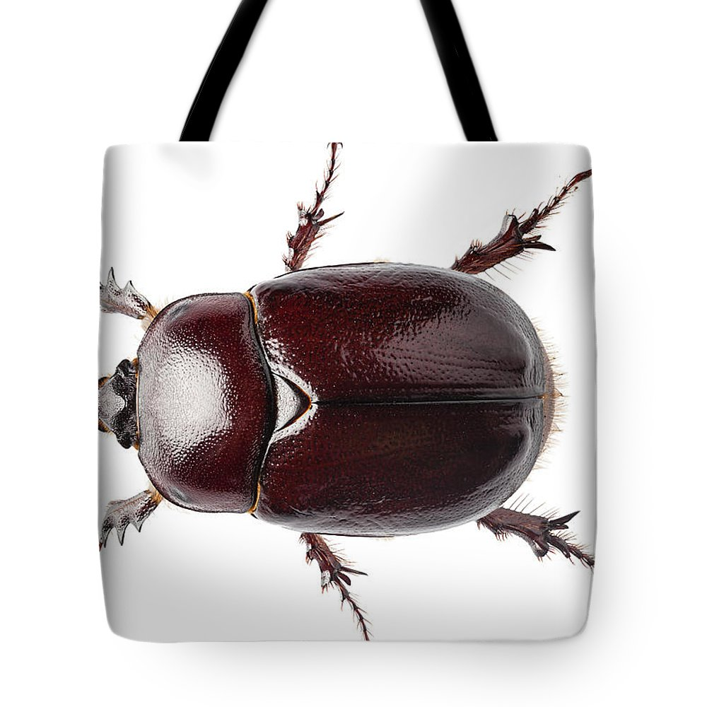 Animal Tote Bag featuring the photograph European Rhinoceros Beetle Female by Pablo Romero