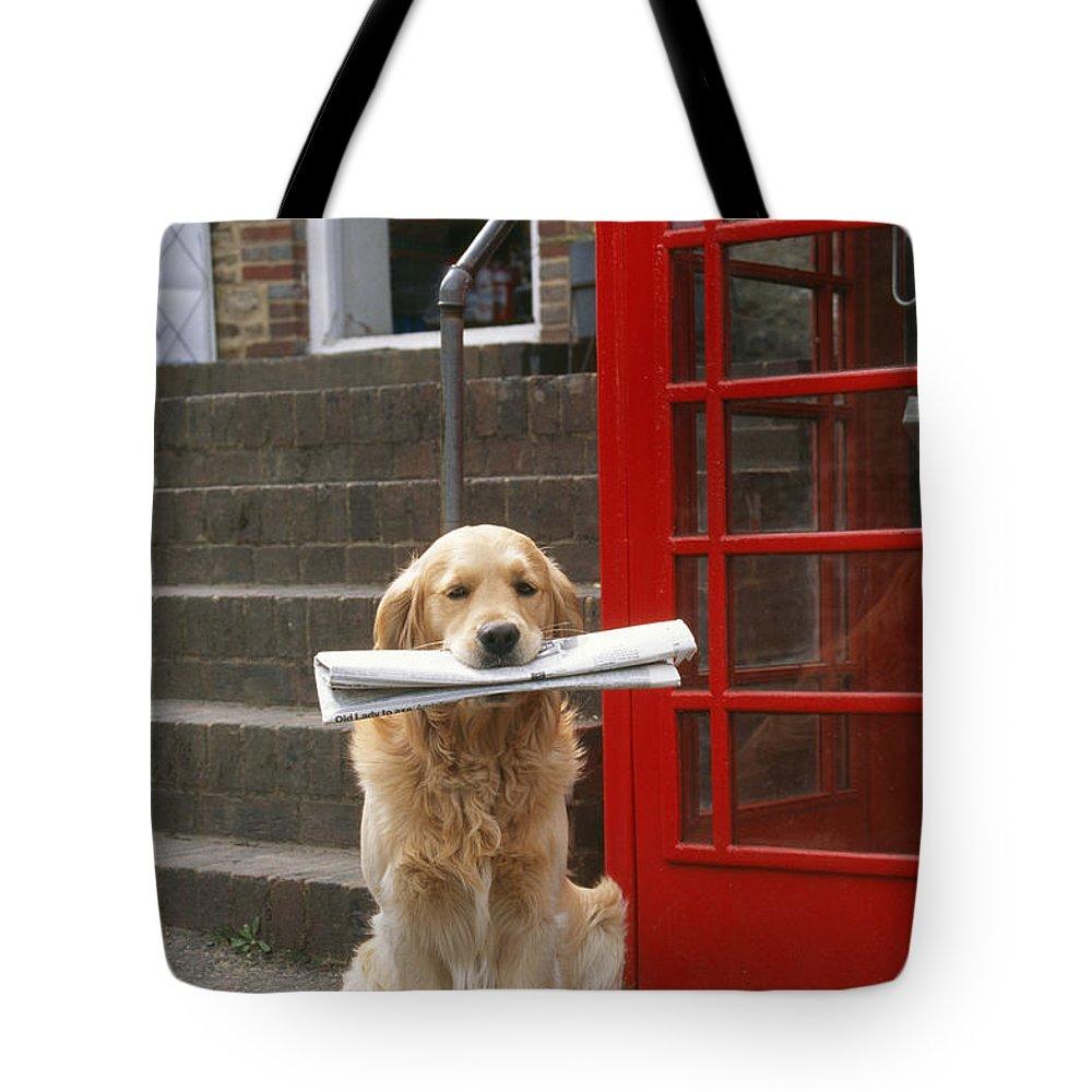 Golden Retriever Tote Bag featuring the photograph Golden Retriever Dog by John Daniels