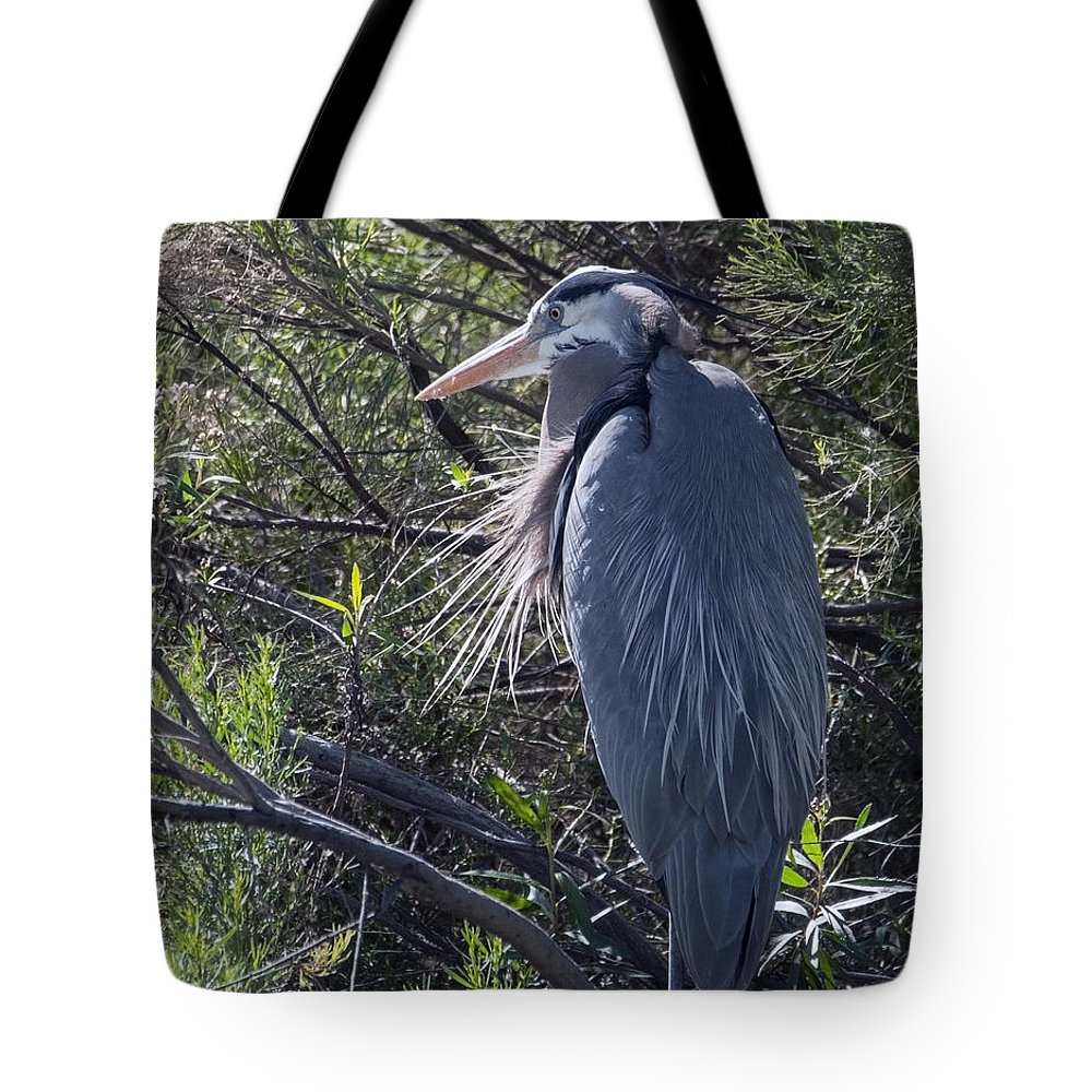 Great Blue Heron Tote Bag featuring the photograph Great Blue Heron by Tam Ryan