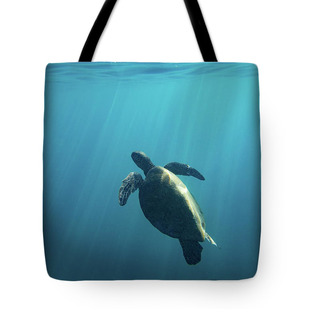 Photography Tote Bag featuring the photograph Green Sea Turtle Swimming by Animal Images
