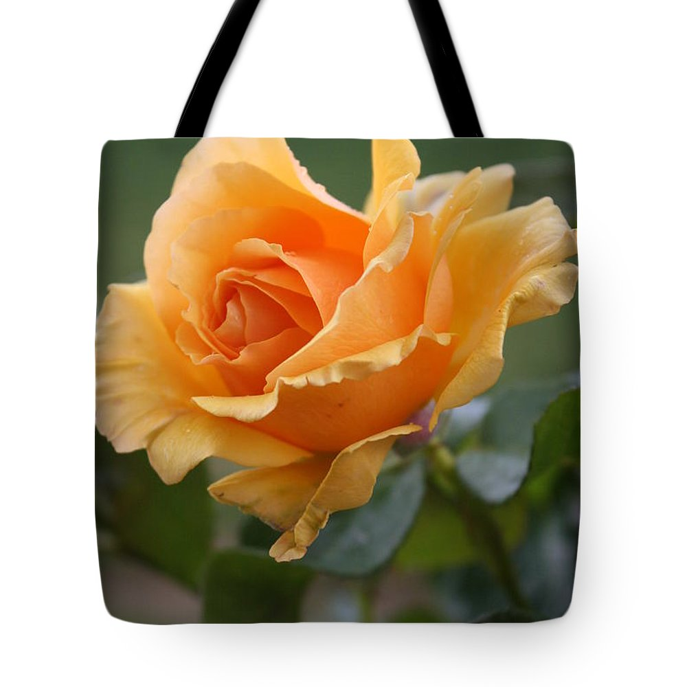 Rose Tote Bag featuring the photograph In Full Bloom by Christiane Schulze Art And Photography