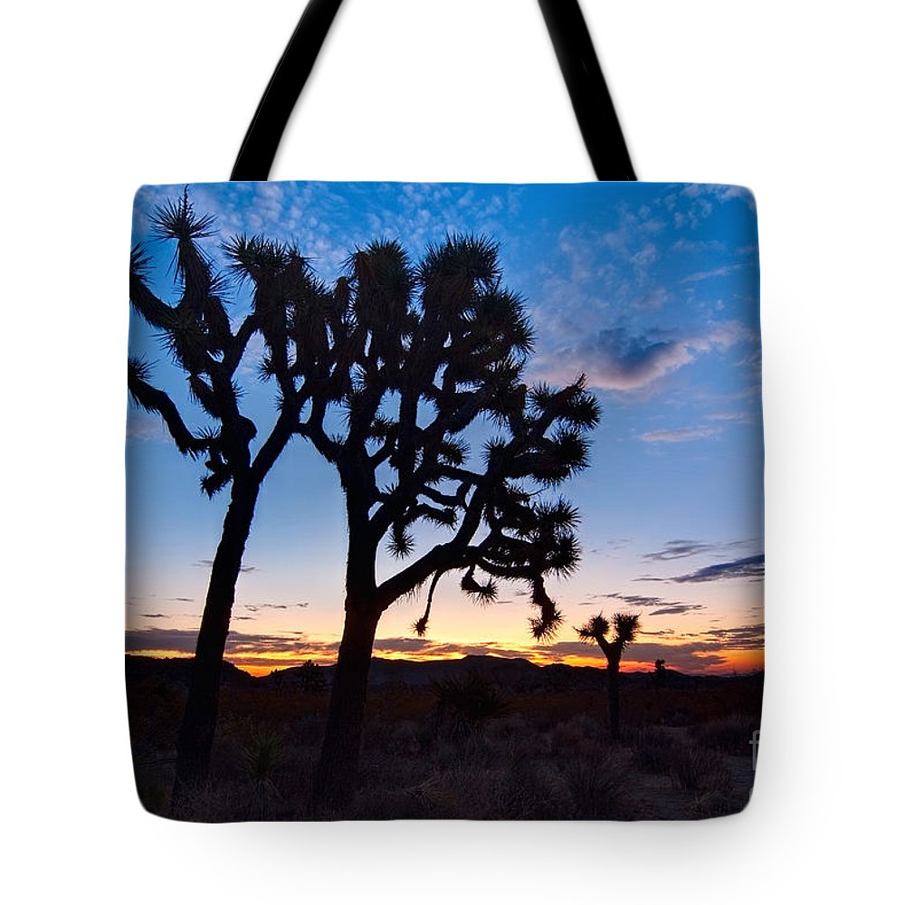 Yucca Brevifolia Tote Bag featuring the photograph Josua Trees Beautifully Lit During Sunrise In Joshua Tree Nation by Jamie Pham
