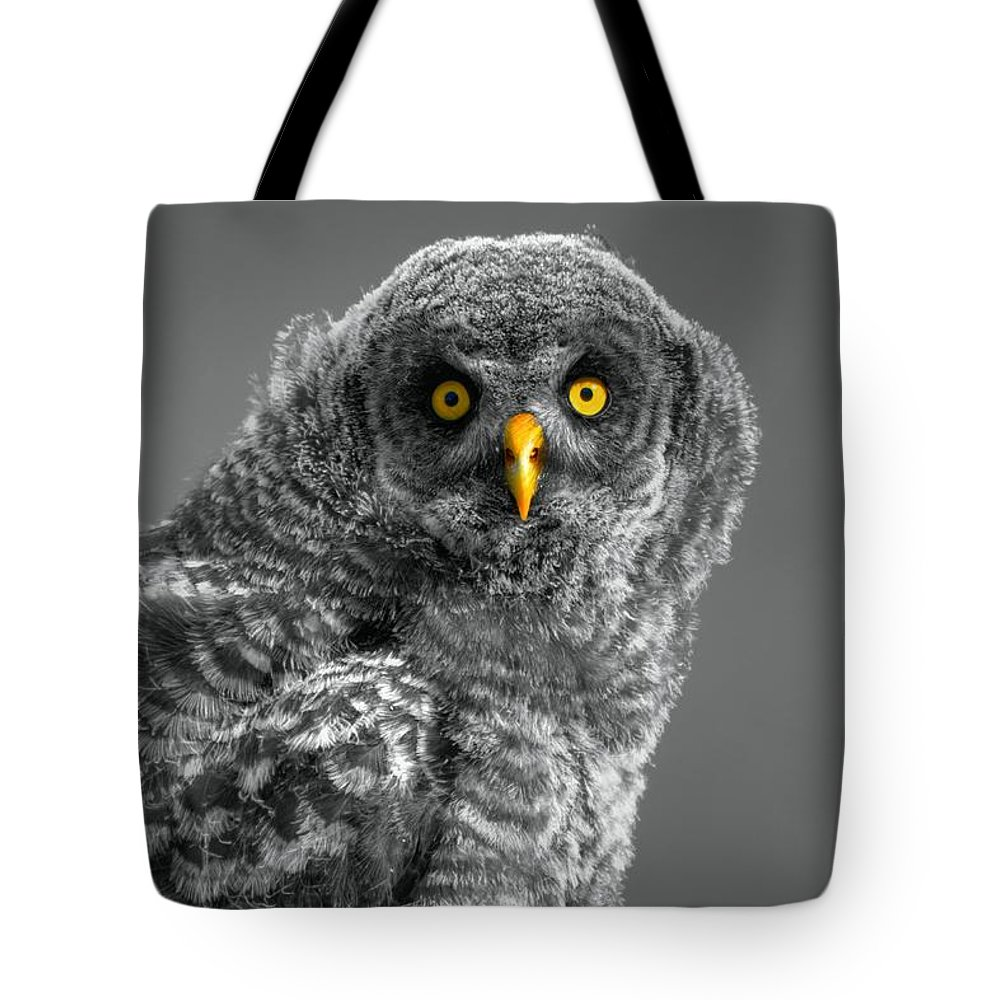 Ghost Forest Tote Bag featuring the photograph Mesmerized by James Anderson
